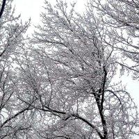 Графика зимы. :: Елена