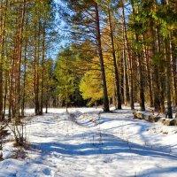 Зимний лес (февраль) :: Милешкин Владимир Алексеевич