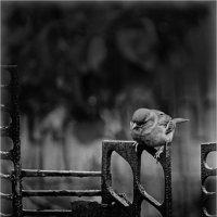 Думы мои тёмные, думы окаянные... :: Laborant Григоров