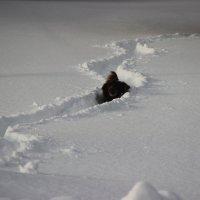 по снежной реке :: Вячеслав Исаков