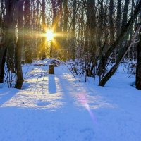 Солнце в лесу :: Юрий Стародубцев