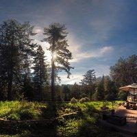 домик в лесу :: viton