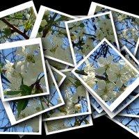 Весенний калейдоскоп :: Нина Корешкова