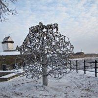 Свадебное дерево :: veera (veerra)