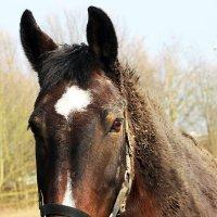 Умный конь :: Alexander Andronik
