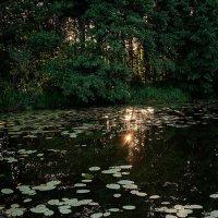 Солнце в озере. :: Андрий Майковский