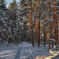Пахнет снег февральским солнцем... :: Лесо-Вед (Баранов)