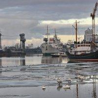 Февраль в Калининграде :: Михаил Бобков