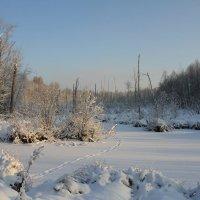 Пруд в лесу... :: Nikolay Shumilov