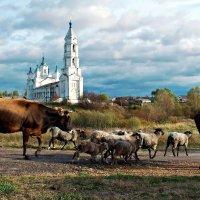 Идут коровы ко дворам своим.. :: Александр Архипкин