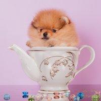 Чай в одиночку :: Leo Alex Photographer