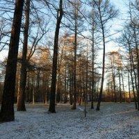 В зимнем парке-2 :: Валентина Жукова