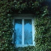 окно :: Леночка .