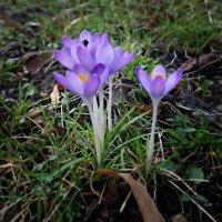 .Весна в ...феврале!!! :: Galina Dzubina