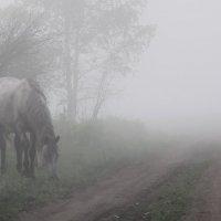 Утро туманное... :: Анна