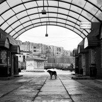 Street life :: Evelina Alevina