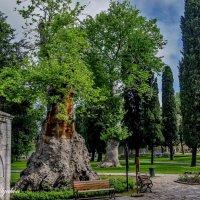 Старое дерево :: Georgy Kalyakin
