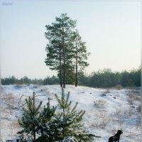 По первому снежку :: Александр