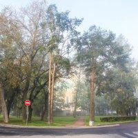 Утренний туман :: Алёнка Шапран