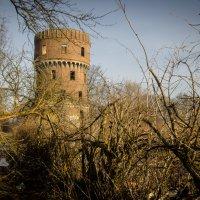 Старый сад и старая башня :: Игорь Вишняков