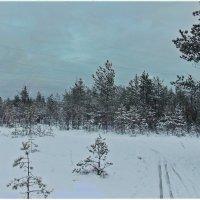 Лыжня в лесных сумерках. Автор Натан :: Весна