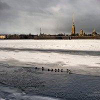 Полынья на Неве :: Владимир Макаров