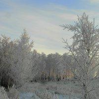 Холодное утро. :: nadyasilyuk Вознюк