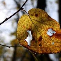 Осени глаза.... :: Валерия  Полещикова