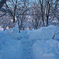 Экскурсия в Гадюкино зимой (34) :: Александр Резуненко