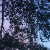 Холодный вечер :: Анастасия Макарова