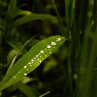 После дождя :: Ольга Козинец