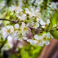 Весна :: Сергей Малый