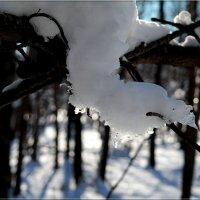 Снежные украшения :: Андрей Заломленков