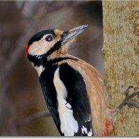портрет в профиль :: linnud