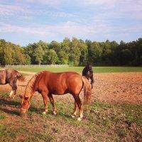 Horses :: Зоя Былинович