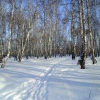 Разноликий февраль . :: Мила Бовкун