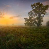 Переливами трав... :: Roman Lunin