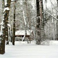 Домик в лесу :: Милешкин Владимир Алексеевич