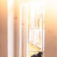 голубь на окне :: Тася Тыжфотографиня