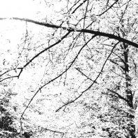 Ветви :: Николай Филоненко