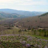 Пуринский хребет, весна :: Анна
