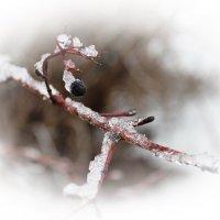 Хрустальные украшения зимы :: Андрей Михайлин
