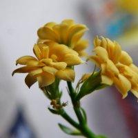 Каменный цветок цветёт :: Валентина Пирогова