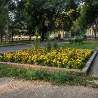Тихим утром в парке им. Т.Г. Шевченко :: Denis Aksenov