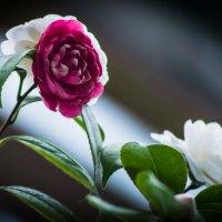 цветы :: Евгений U
