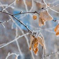 Среди зимы :: Любовь Потеряхина