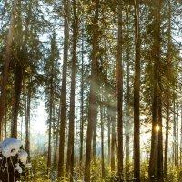 Дыхание весны 2 :: Риф Сыртланов