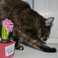 Опять цветы притащила.... :: Маргарита ( Марта ) Дрожжина