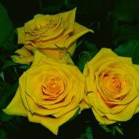 Цветы цвета Солнца :: Ольга