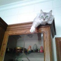Руководить хозяевами когда они готовят, легче сверху!:) :: Жанна Мааита